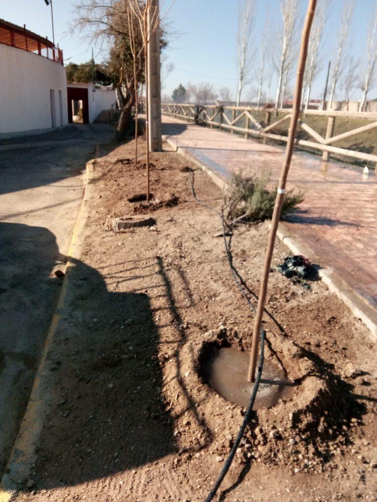 Replantación de árboles en Avda. El Molino y Paseo del Záncara