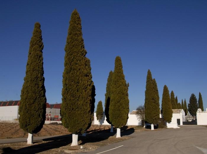 """El cementerio permanecerá abierto mañana con motivo del """"Día del Padre"""""""